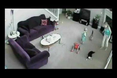 La baby sitter sgrida il bambino, lui scoppia a piangere…e il gatto? Piccolo ma deciso!