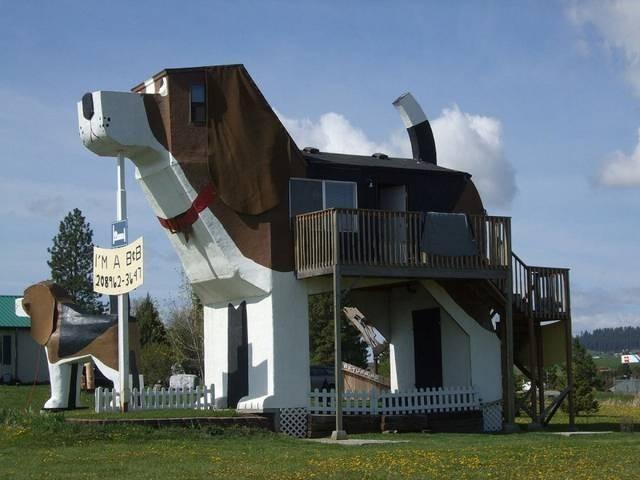 casa-cane