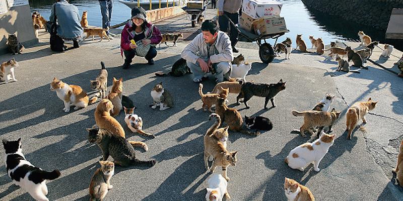 Aoshima - Cat Island In Seto Inland Sea