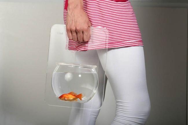 pesce rosso a spasso
