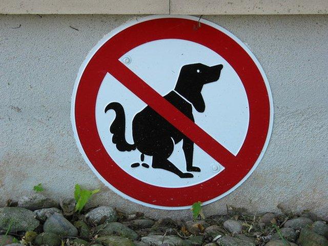 vietato_cani