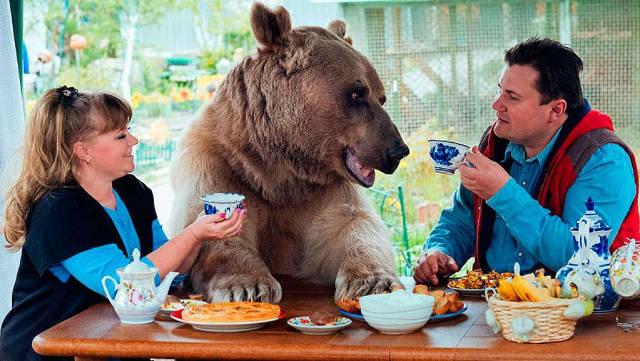 orso vive in casa