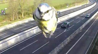 uccello multato da autovelox