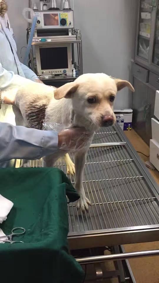 Cina: cane colpito da due frecce riesce a salvarsi
