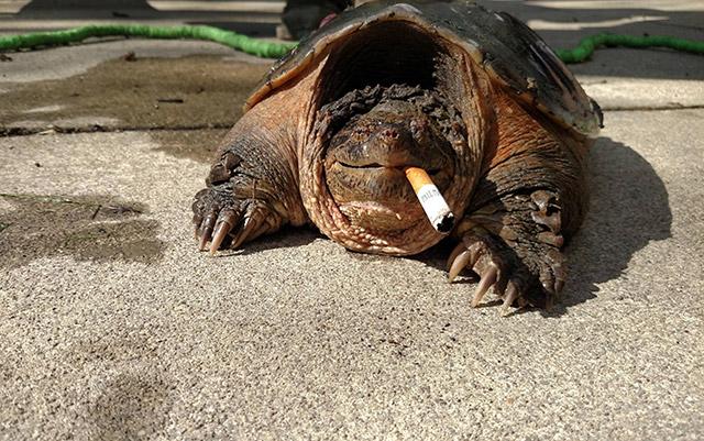 La storia della (strana) tartaruga che fuma sigarette!
