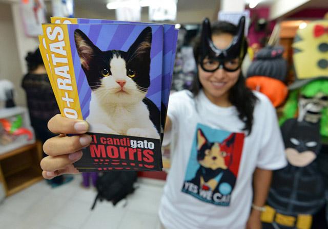 Messico, un gatto si candida a sindaco di Xalapa
