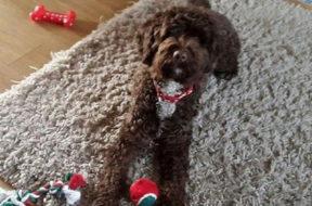 Buddy, la storia a lieto fine del cane che soffre d'ansia