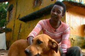 Lilica, il cane che tutte le sere porta cibo ai suoi amici