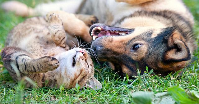 Gatti: secondo uno studio sono intelligenti quanto i cani
