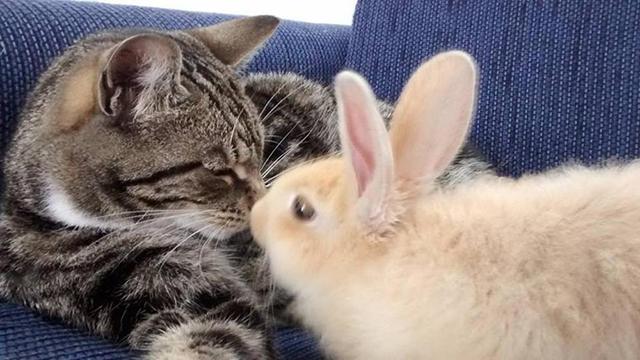 Gatto e coniglio teneri come non mai: la vita di Bella e Poppy