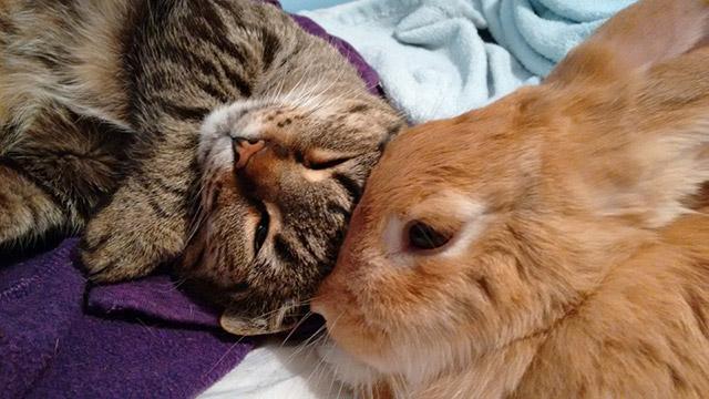 Poppy, la coniglietta, e Bella, il gatto