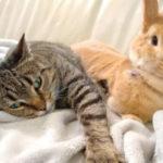 Gatto e coniglio amici inseparabili